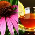 Echinacea tea has been a popular drink for hundreds of years, here's why...
